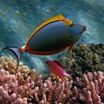 Cute Looks Like A Lady Fish With Big Red Lips Lol Beautiful