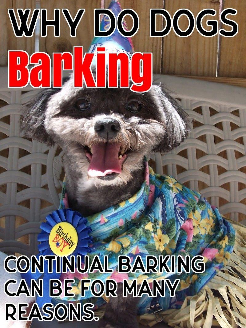 Why Dogs Barking Dogs Dog Barking Stop Dog Barking
