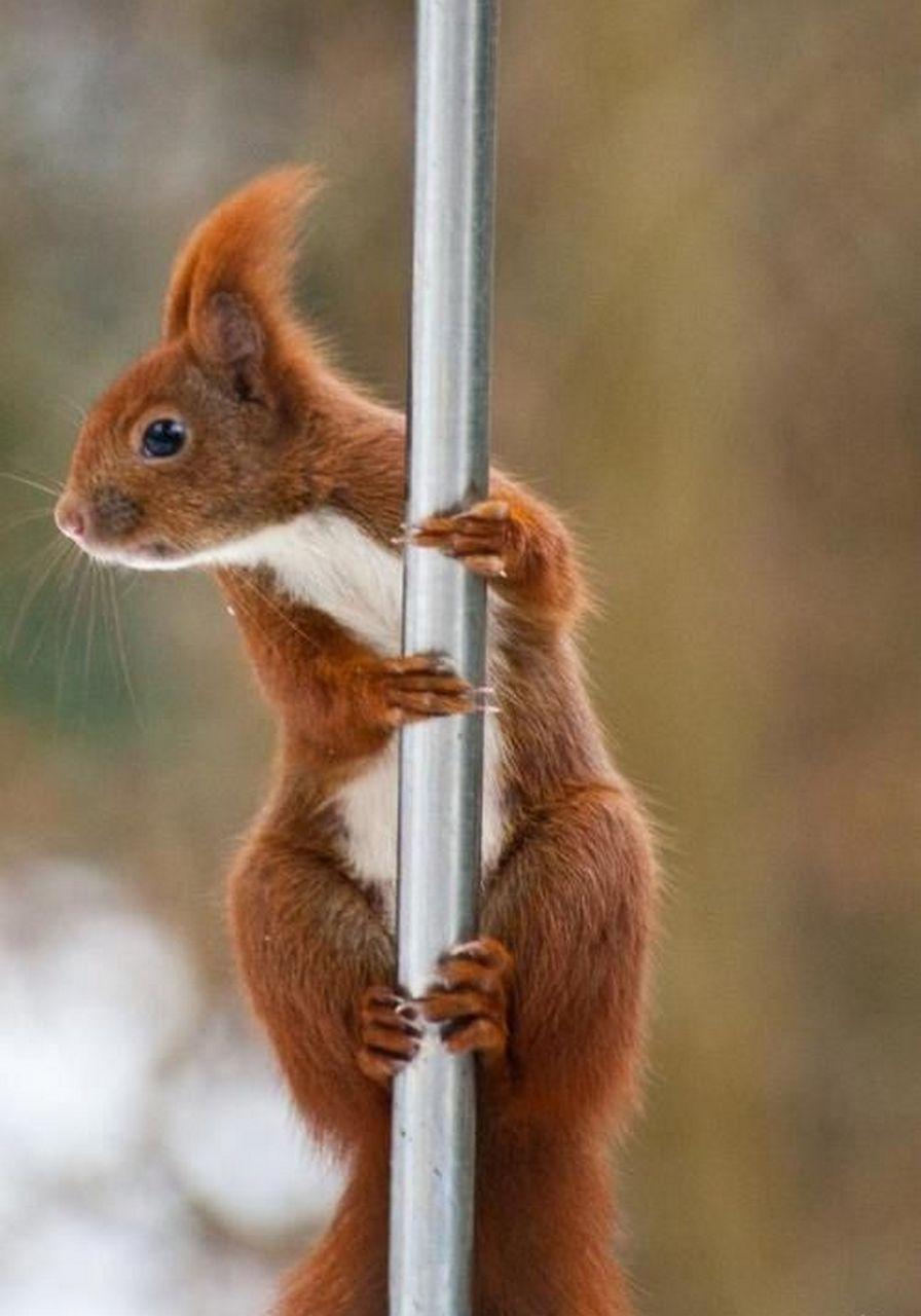 Красивые, картинки животных смешные с текстом