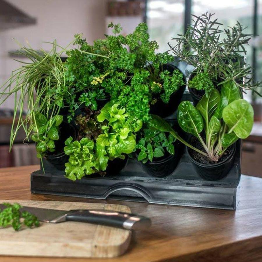 1 Watex Countertop Garden Indoor Gardening In 2020 Vertical