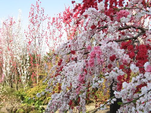 Spring landscape at a temple in Yamato, Japan