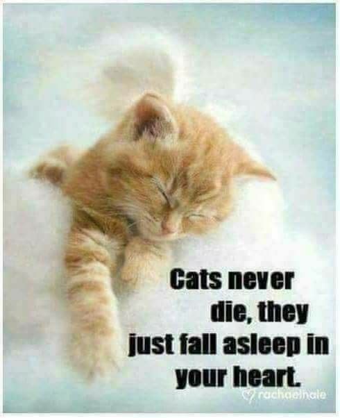 Pin by Dori Kelsey on Feelings | Cats, Pet grief, Crazy cats