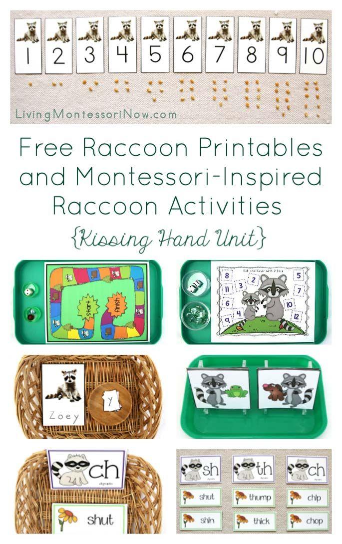 Free Raccoon Printables And Montessori Inspired Raccoon Activities