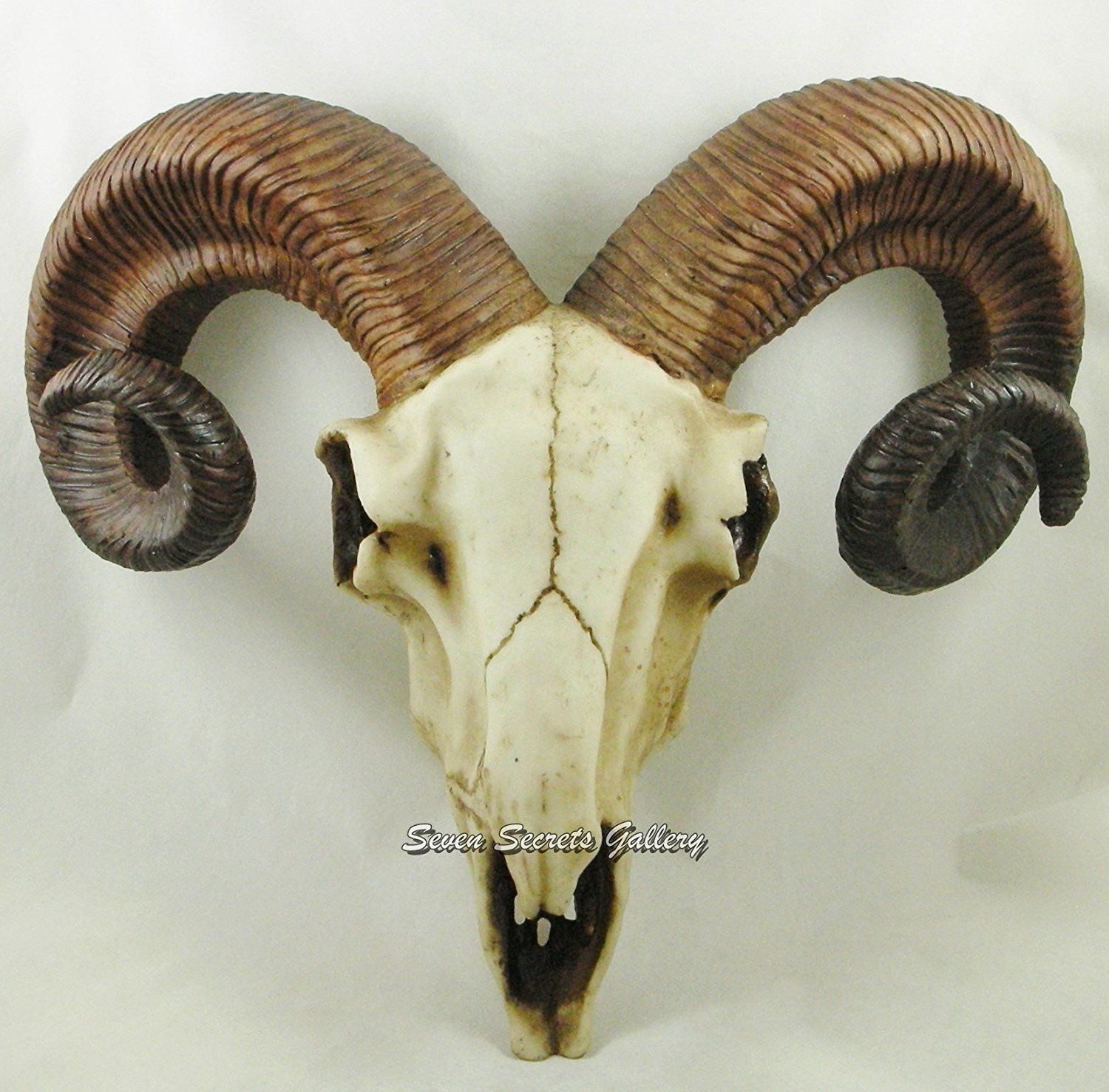 Ram Head Trophy Authentic Horns Wall Mounted Sheep Skull Resin