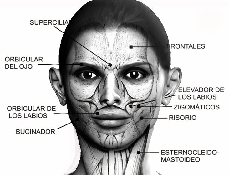 Músculos faciales.   Gimnasia facial y ejercicios faciales ...