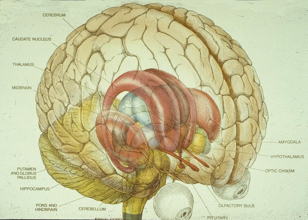 Brain | countyourculture | brain functions/reminders | Pinterest