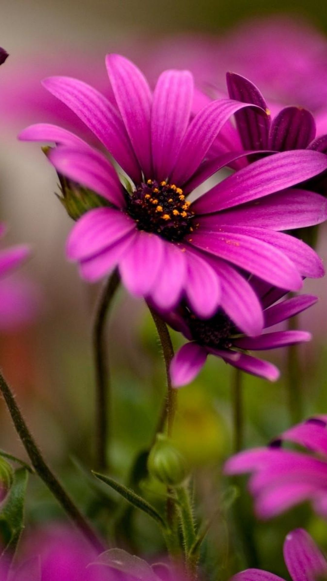 Beautiful Flowers Incredible Art In Nature Pinterest Flowers