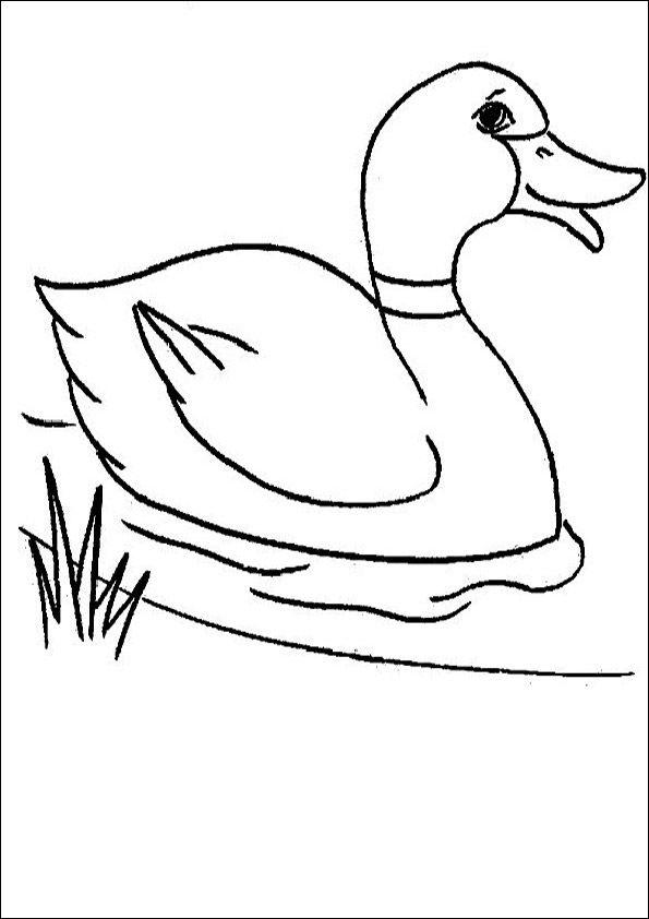 enten zum ausdrucken 01 | vogel malvorlagen, ente zeichnen