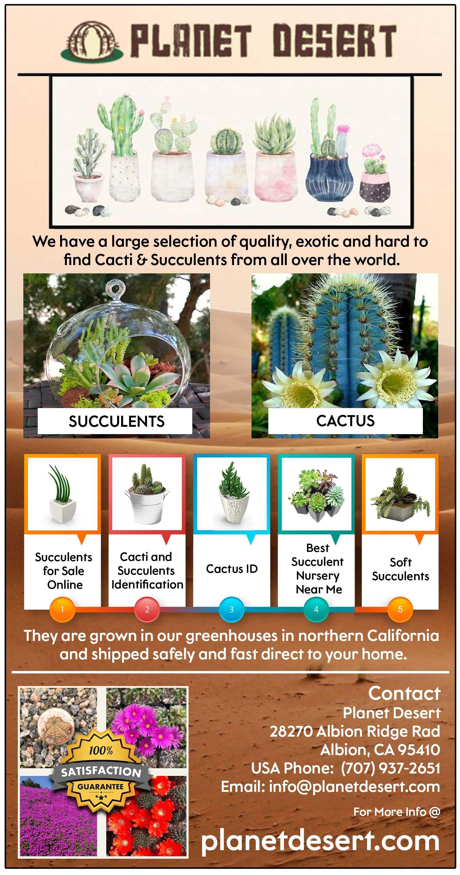 72 Hour Heat Pack Cactus Plants