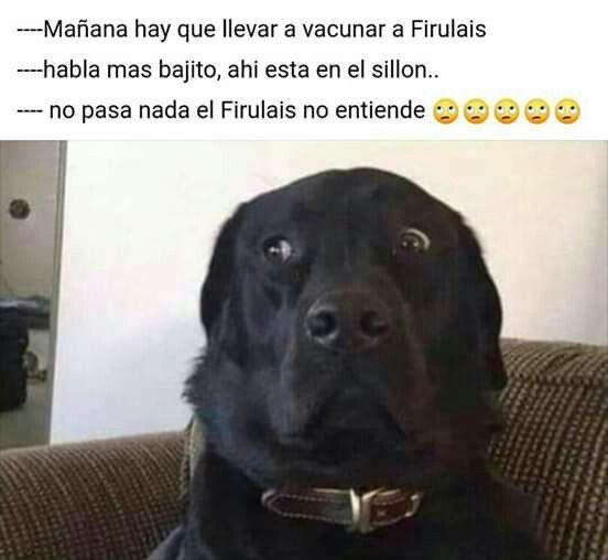 Pin De Maria Jose En Chiste De Perros Memes Divertidos Gracioso Meme Gracioso