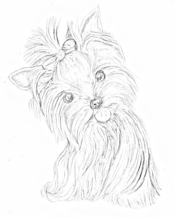 Yorkshire Yorkie Painting Puppy Coloring Pages Dog Drawing