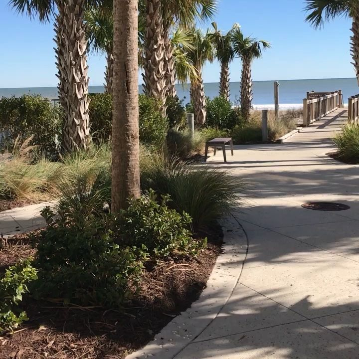 Palm Trees In Myrtle Beach Sc With