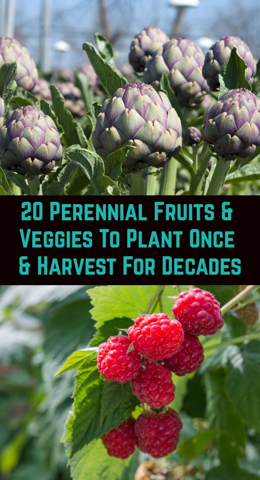 20 Perennial Fruits & Veggies To Plant Once & Harv