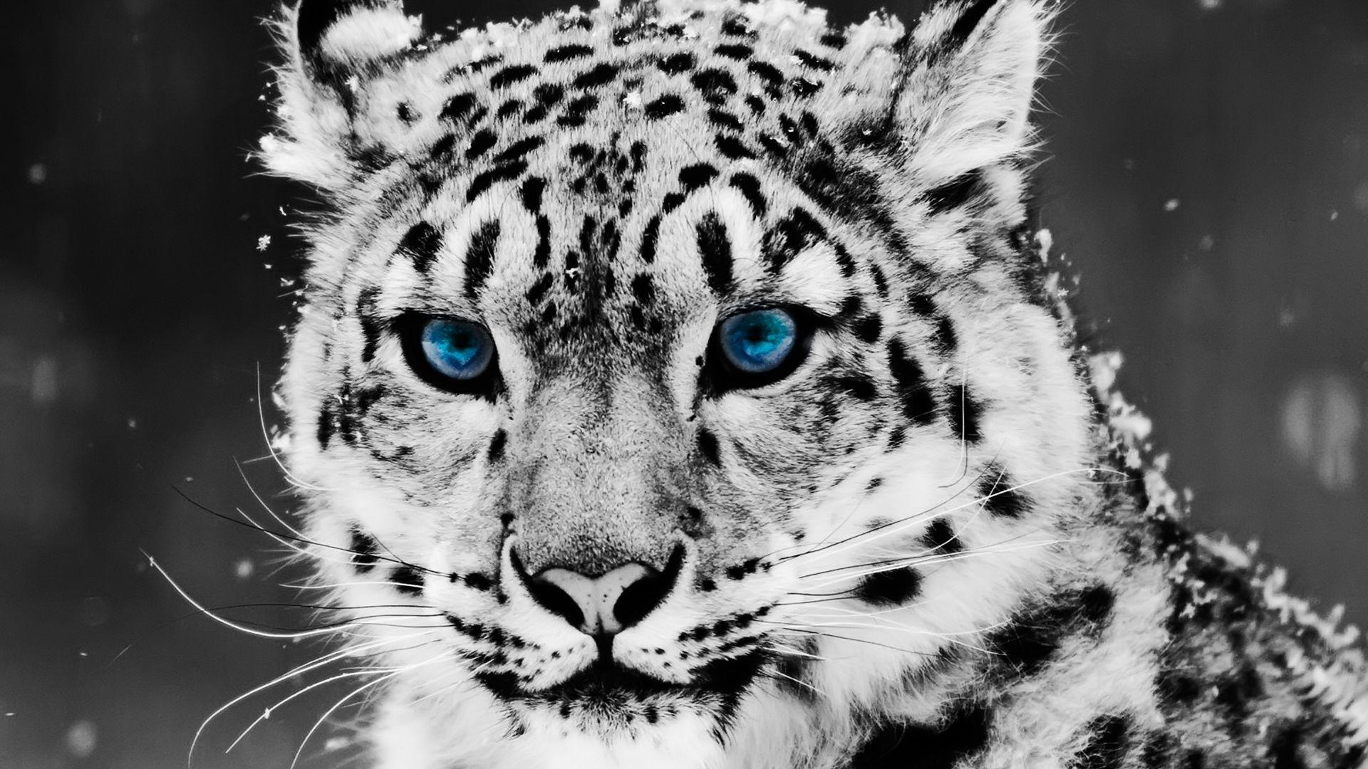 Kawaii Lindo Leopardo Jovenil