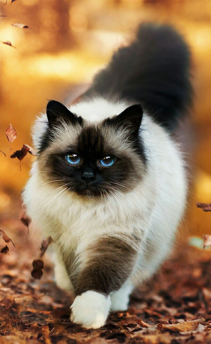 Pin By Btoless Artdg On Gatos With Images Pretty Cats Beautiful Cats Cute Cats