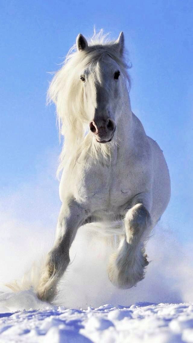 Beautiful White Horse Horses Horse Wallpaper Horses In Snow