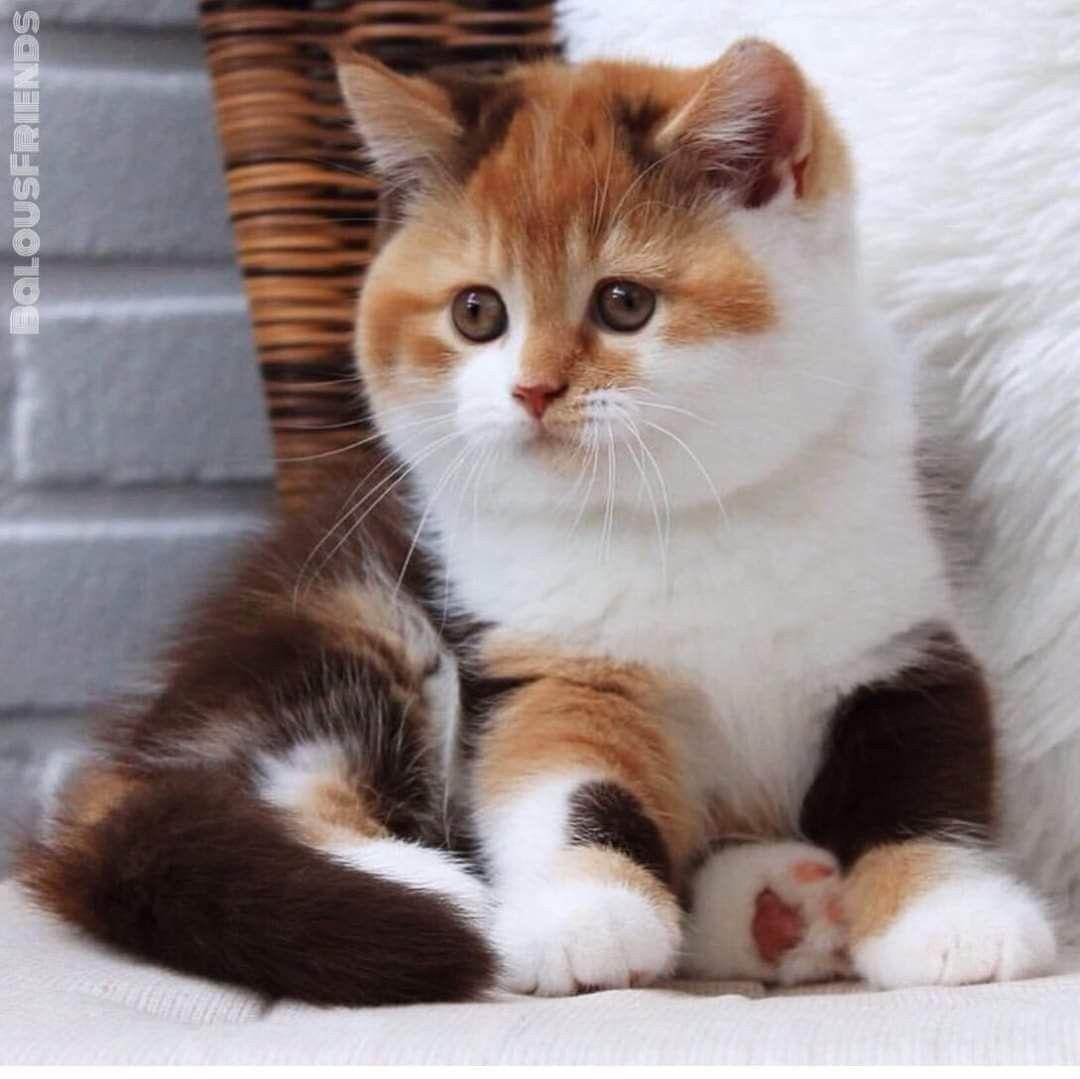 Pin Von Hambloch Moni Auf A Sabrina In 2020 Katzen Babytiere