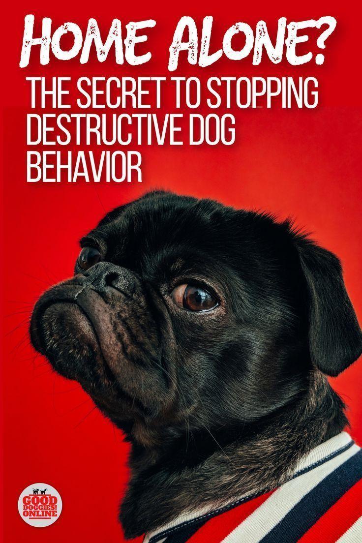 Home Alone The Secret To Stop Destructive Dog Behavior How To
