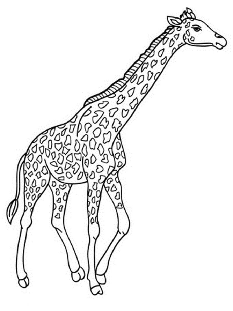 Giraffe Coloring Pages for 2019 | Coloring pages, Giraffe