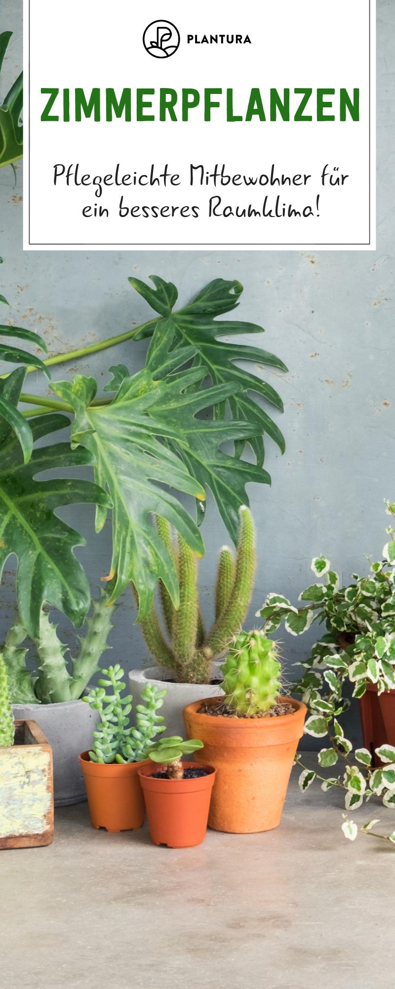 Die 10 Besten Pflanzen Fur Drinnen Plantura Pflanzen Zimmerpflanzen Pflegeleichte Pflanzen