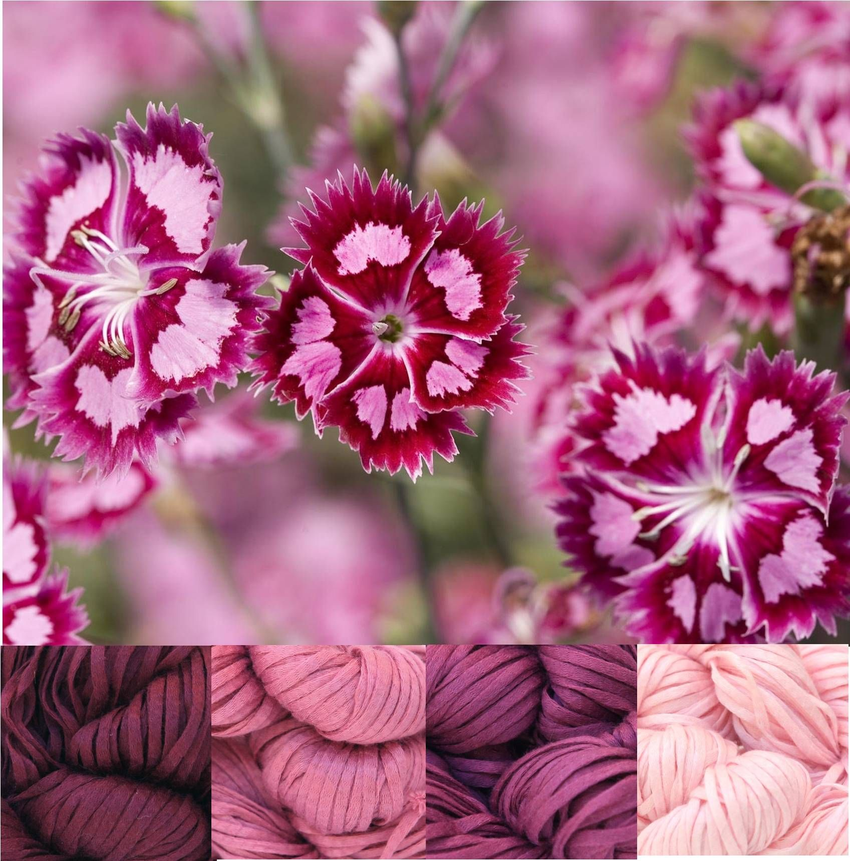 My Color Palette Pink Flowers Lucci Cotton Tape Yarn In