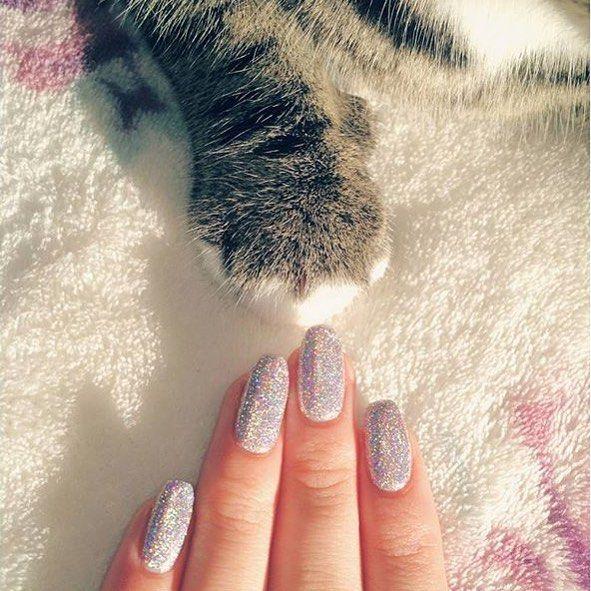 Kittens Everywhere Love My Holo Polish Menchiethecat