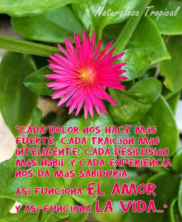 Consejo de amor para una vida feliz. Flor hermosa