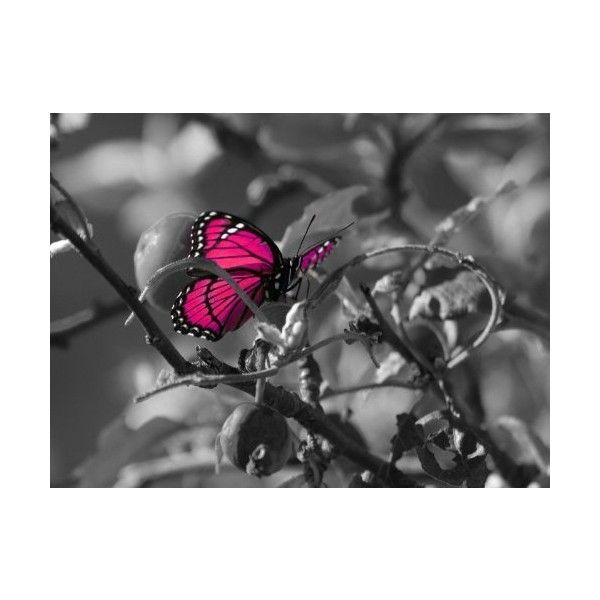 Pink Color Pop Butterfly On Black White Background Stunning Canvas Art 20 Liked On P Black And White Background Black And White Theme Canvas Art Prints