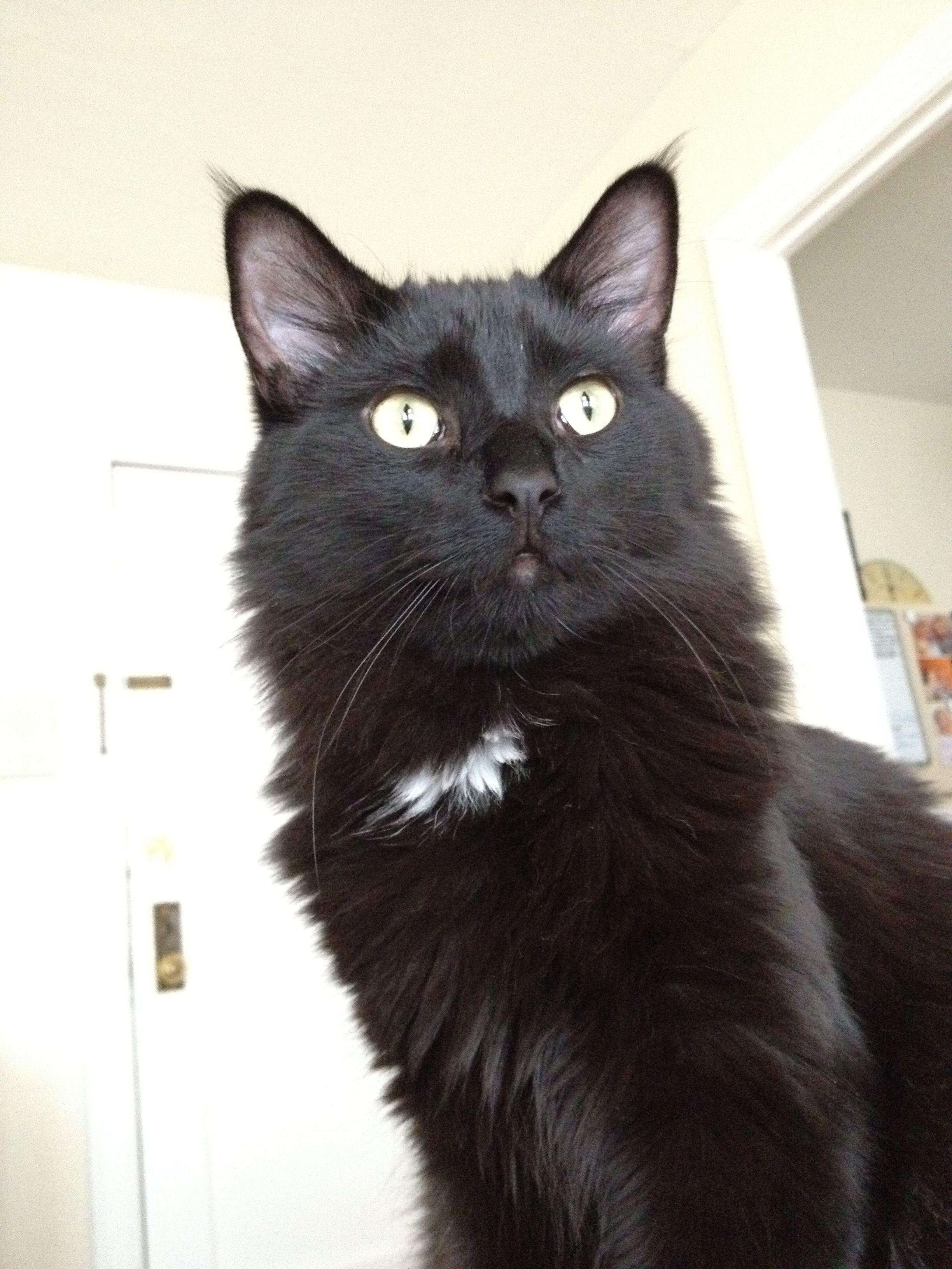 Adopt Jasper from Feline Rescue, Inc. St. Paul, MN http