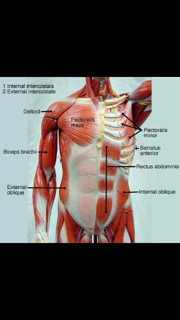 Found on google search engine I typed anatomy and physiology images ...