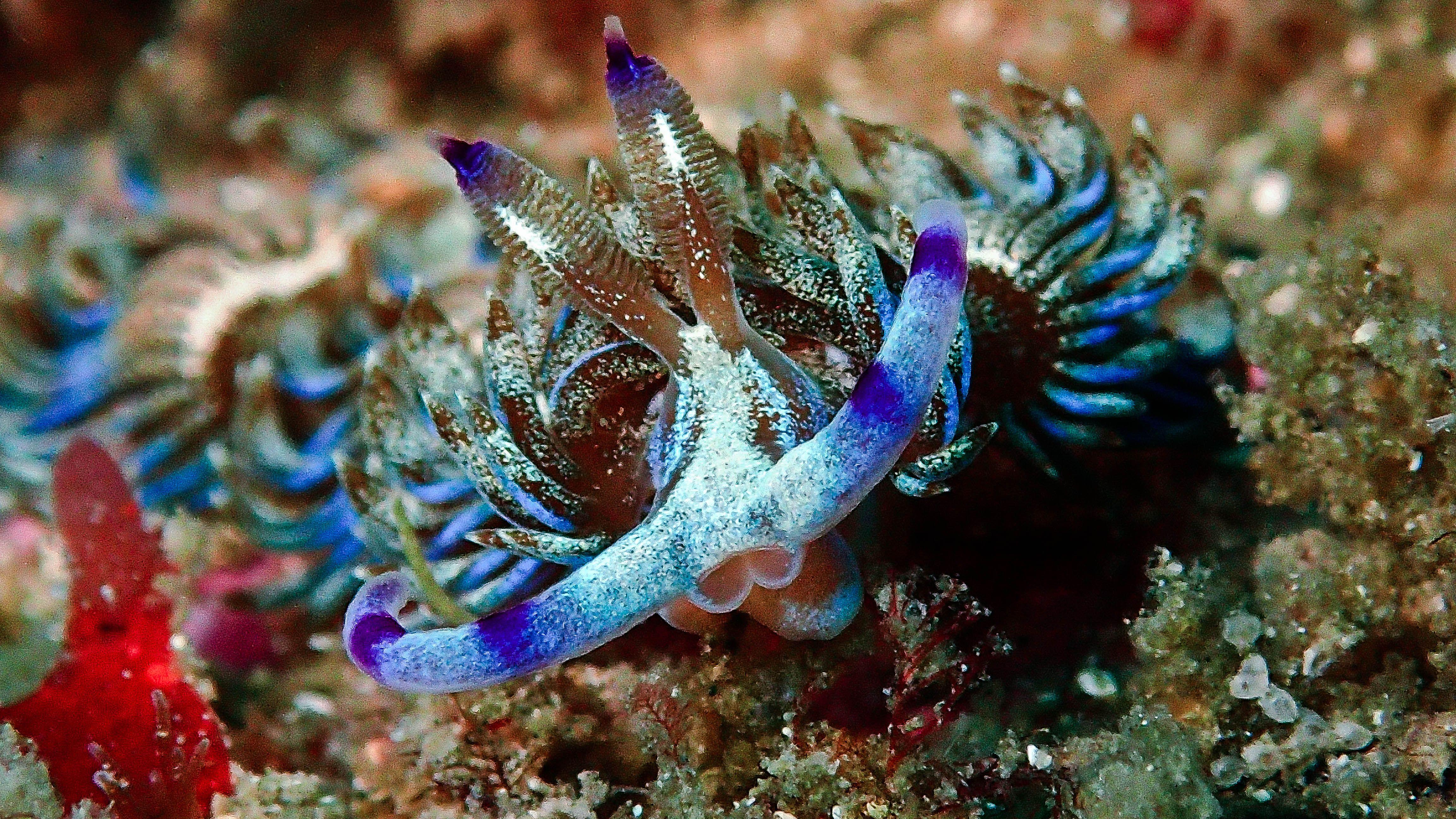 Blue dragon fish pet pets blue dragon