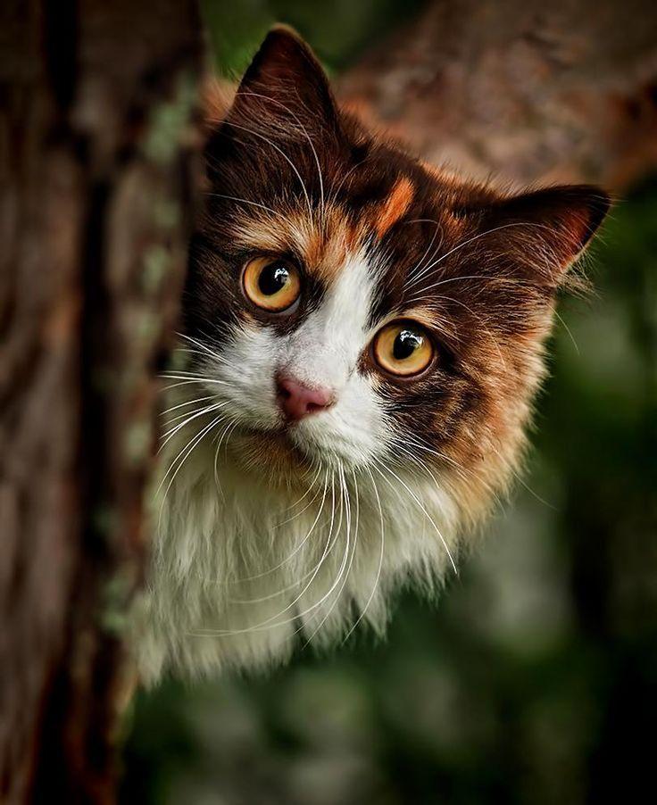 Pin de sofi glz en mininos pinterest gato p jaro for Gato de carpintero