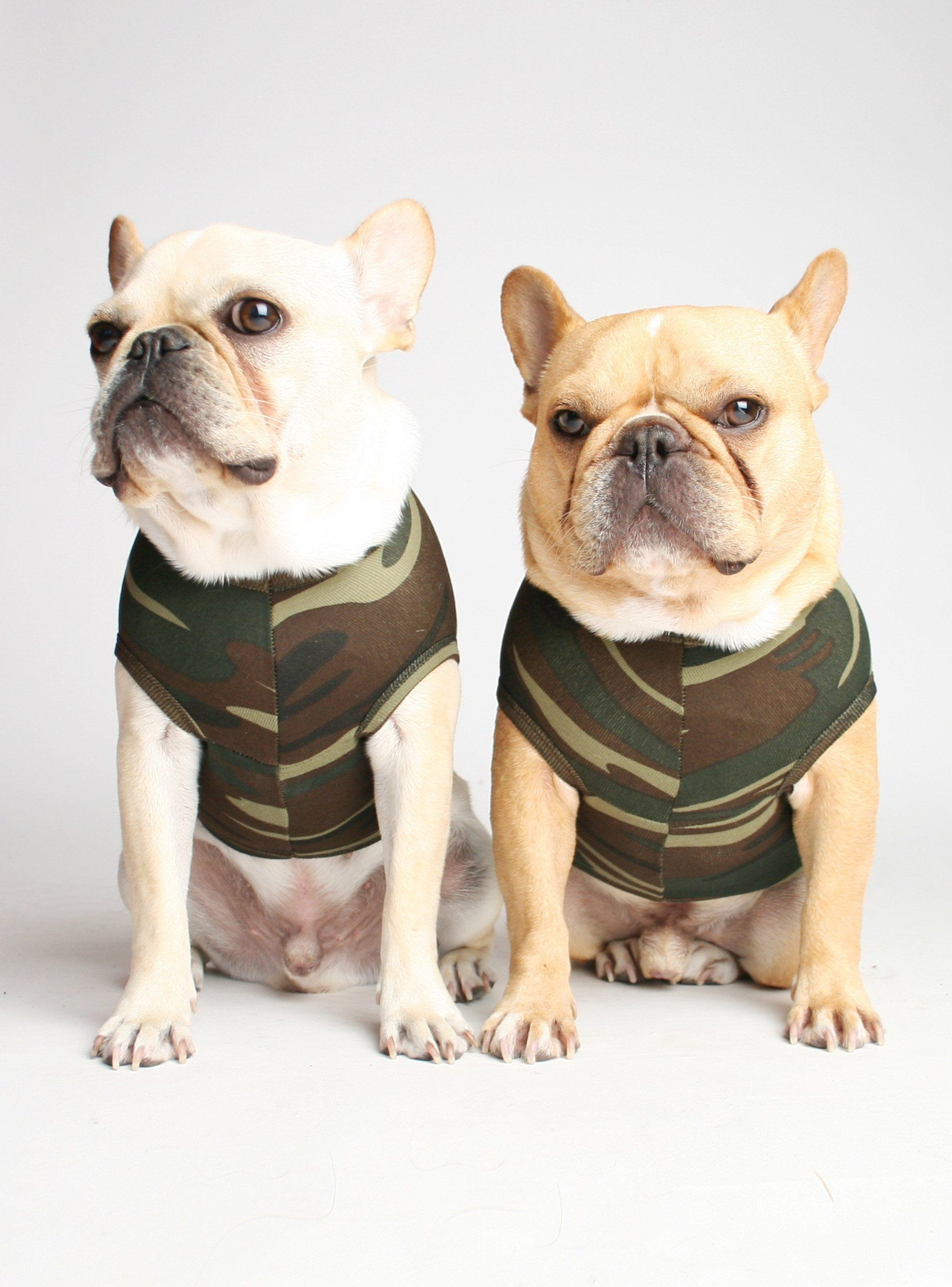 The Camo Dog Tank French Bulldog Bulldog Puppies French