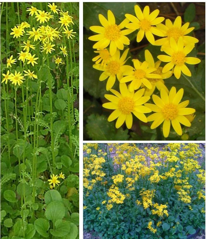 b353f506f22d1b8117c385b613f1184f - Collin County Master Gardeners Garden Show