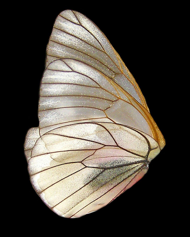 Pin By Katelyn Hammer On Tube Wings Wings Png Butterfly Wings Wings
