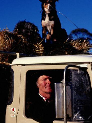 Farmer with Dogs, Mansfield, Victoria