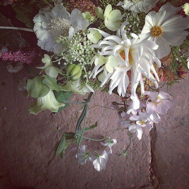 Stunning blooms