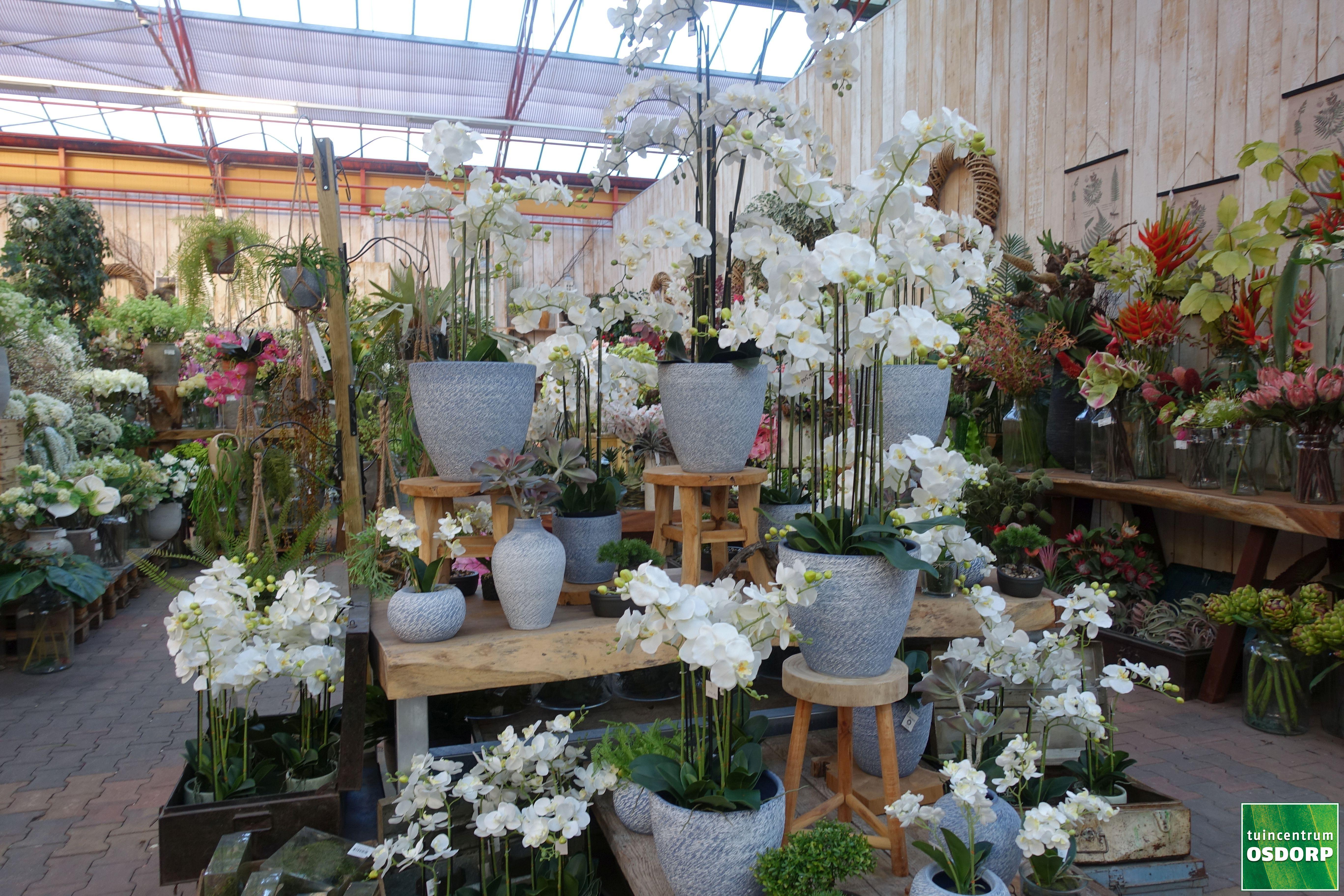 Bloemstukken met zijde bloemen bij tuincentrum osdorp for Tuincentrum amsterdam