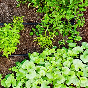 How To Plant An Easy Edible Garden