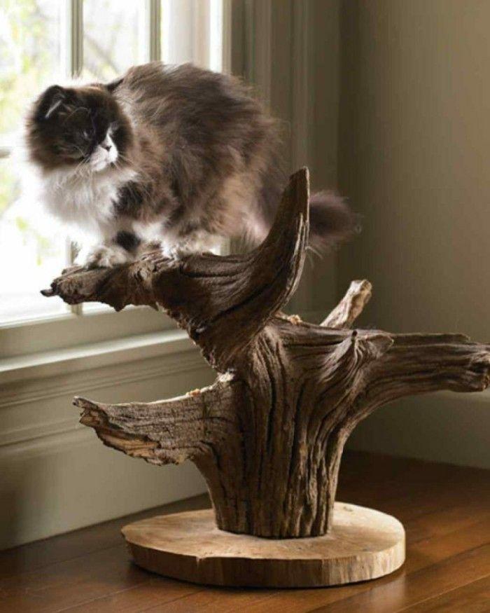 Kratzbaum Selber Bauen Man Kann Aus Naturmaterialien Einen