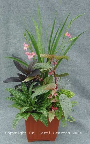 9+ Bewitching Native Garden Ideas Queensland Ideas ...