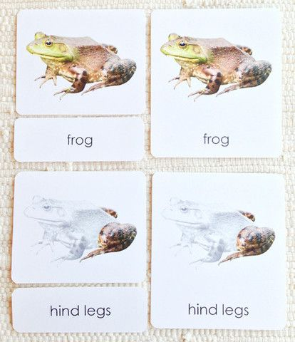 Parts Of The Frog 3 Part Reading Teaching Ideas Science