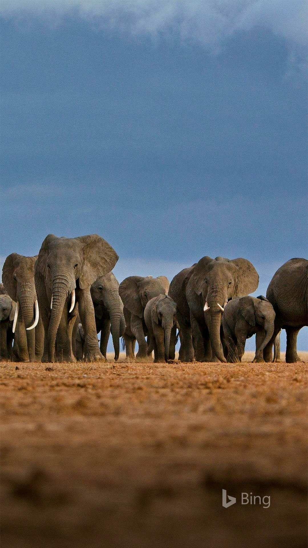 Pin by Jordan Morpheus on BING wallpaper Elephant