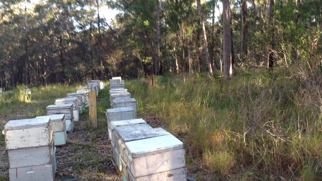 Bees in our apiary