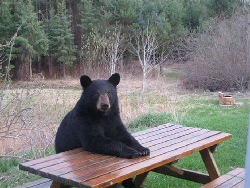 - Waiter a beer please