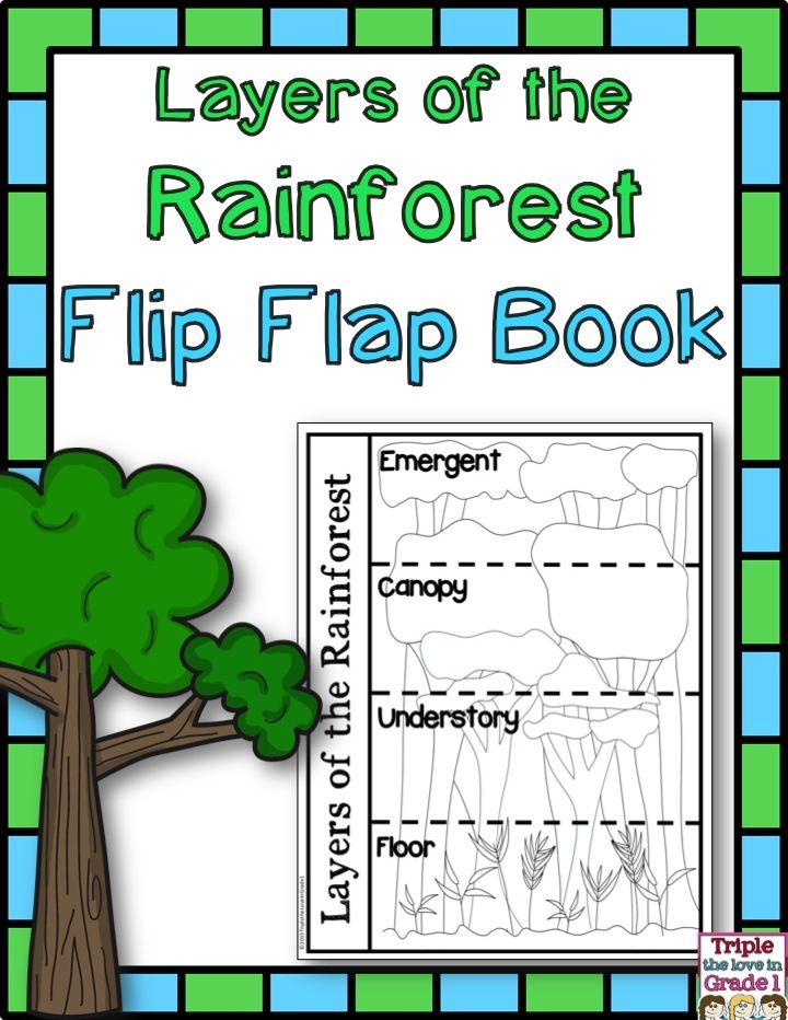 Layers Of The Rainforest Rainforest Classroom Rainforest