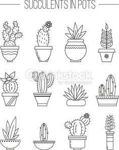 Set of succulent plants and cactuses in pots. Linear botanical vector...