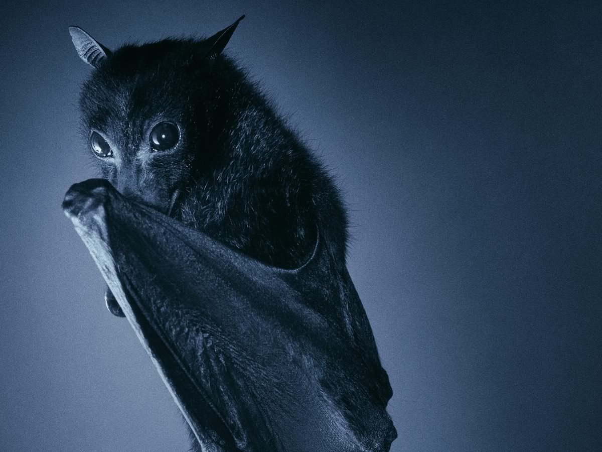 The Long Standing Myth That Bats Are Blind Is False Bats Eyes Are