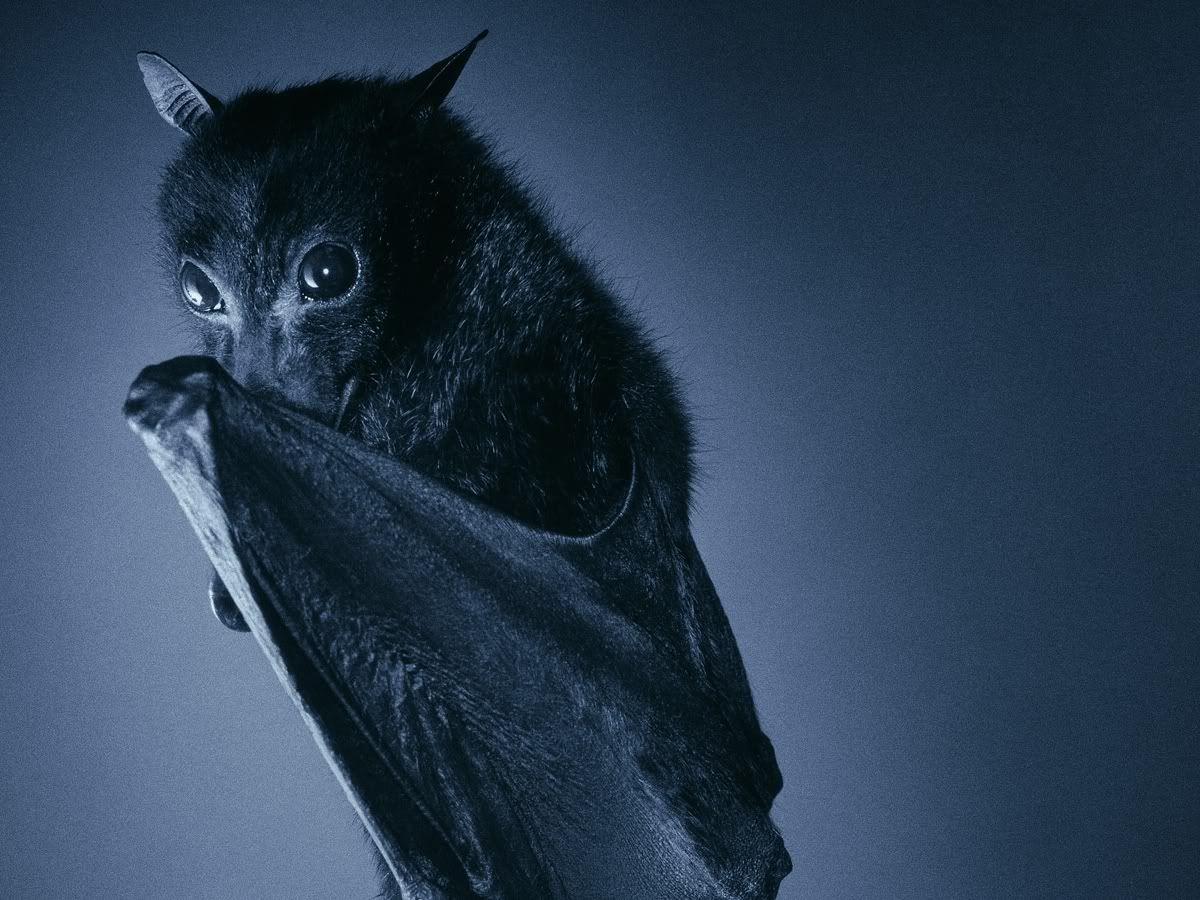 A Bat Cute Bat Fox Bat Bat