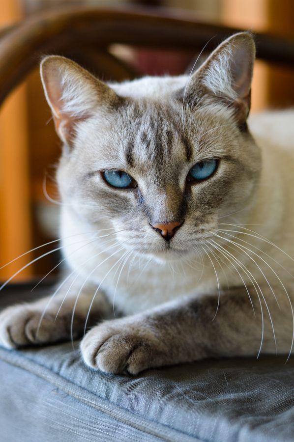 a kittttty....